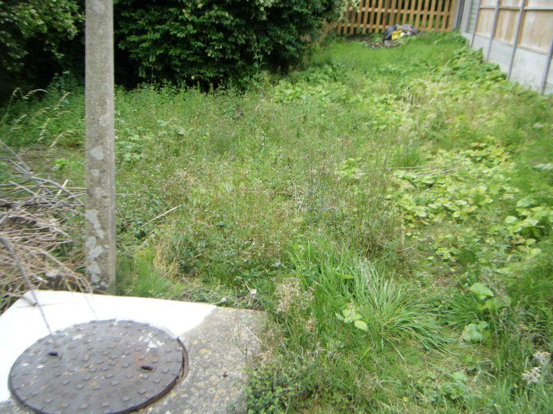 my garden 4