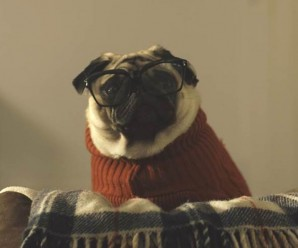 Vision Direct – A Pug's Christmas Advert