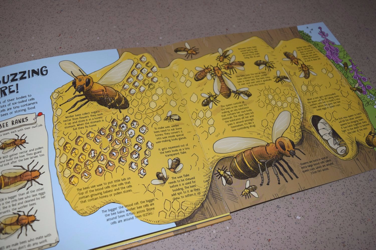 Lonely Planet Kids books - How Animals Build